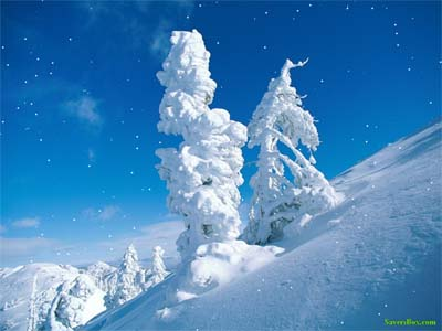 Come in from the cold but still enjoy the scenery! A beautiful snow scene with falling snow on your screen, blue sky, trees covered with snow. If you like nature you will love this screensaver!