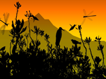 Colibri - Windows 8 Cartoon Screensavers