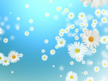 Free Animated Screensavers - Flying Camomiles Screensaver