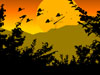 Paradise Birds Screensaver