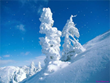 Free Winter Screensavers - Snowfall Screensaver