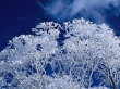 Winter frost branches - winter wallpaper
