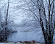 Winter trees snow - winter wallpaper