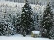Snow trees winter - winter wallpaper