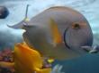 Vista underwater fish - fish wallpaper
