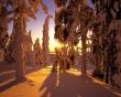 Winter forest view - winter wallpaper