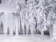 Winter frost - winter wallpaper