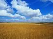 Golden field 2 - scenery wallpaper