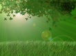 Green leafs in light - scenery wallpaper