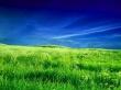 Zeeland field - scenery wallpaper