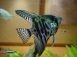My Fish - fish wallpaper