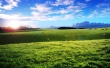 Sheeps cows hills - scenery wallpaper