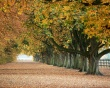 Autumn everywhere - scenery wallpaper