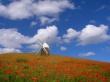 Windmill - scenery wallpaper