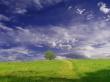 Tree in field - scenery wallpaper