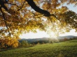 Vista autumn leaves - scenery wallpaper