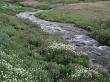 Vista creek - scenery wallpaper