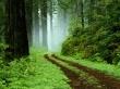 Vista forest - scenery wallpaper