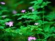 Forest flowers - scenery wallpaper