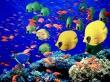 Life below red sea - scenery wallpaper