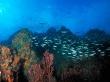 Los roques reef - scenery wallpaper