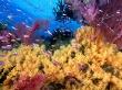 Yellow corals - scenery wallpaper
