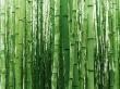 Vista bambus - scenery wallpaper