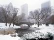 Central Park in winter - winter wallpaper