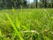 Grass in park - summer wallpaper
