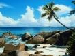 Beach palm tree - scenery wallpaper