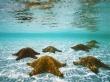 Stars in water - scenery wallpaper