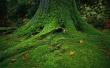Green tree - scenery wallpaper
