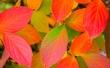 Autumn leafs - autumn wallpaper