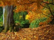 Autumn Forest - scenery wallpaper