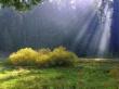Ray Of Heaven - scenery wallpaper