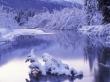 Ostrov River - winter wallpaper