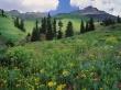 Alpine Meadow - scenery wallpaper