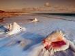 Conch Shells - scenery wallpaper