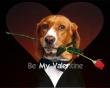 Be My Valentine - valentines wallpaper
