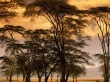 Steppe Trees - scenery wallpaper