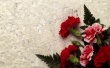Carnation Decor Wallpaper Preview
