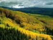 Yellow Forest - scenery wallpaper