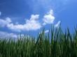 Green Fields - summer wallpaper