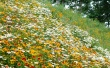 Glade Flowers - summer wallpaper