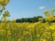 Field Of Happines - summer wallpaper