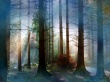 Fog in Forest - other wallpaper