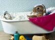 Easter Bunny Bath - easter wallpaper