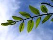 Sky leaf - other wallpaper
