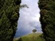 Loney Tree - scenery wallpaper