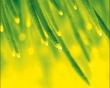 April Shower - other wallpaper